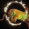 Цирки в Рошале